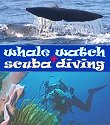 afternoon whale + dolphin